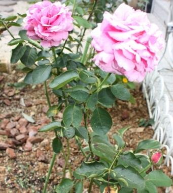 2008_09_25ibupiache