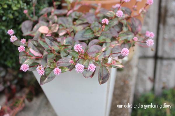2008_11_28porigonamu