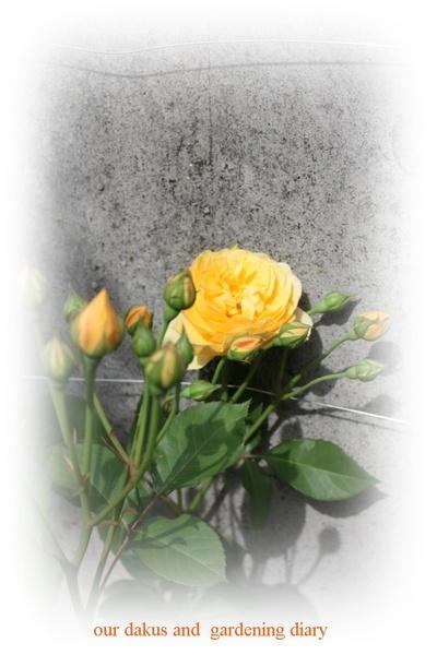 2009_05_19