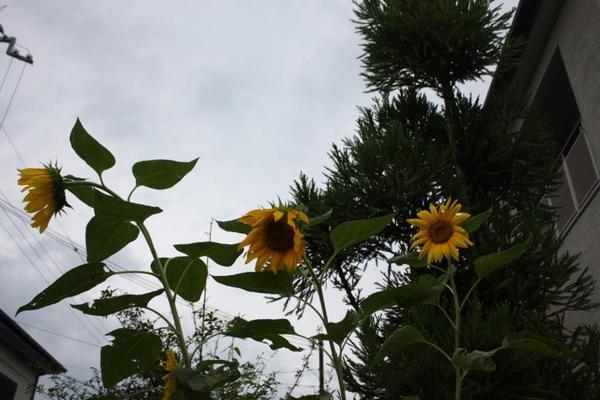 2009_07_22